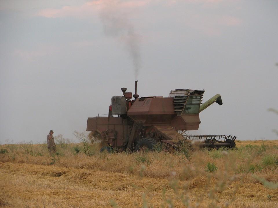 ДНР в этом году намерена экспортировать 100 тысяч тонн пшеницы и ячменя