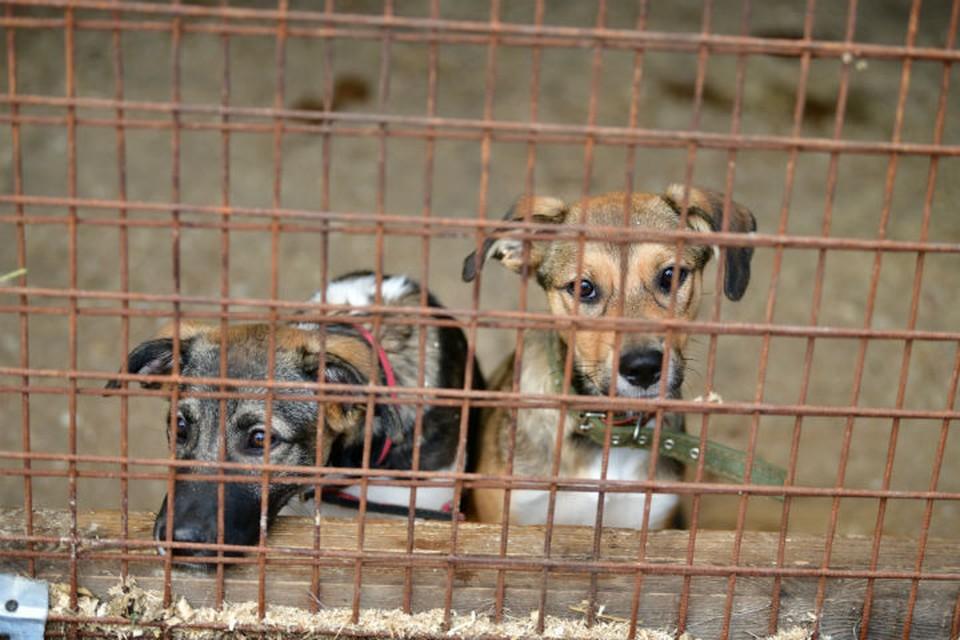 В приюте для собак пройдет день открытых дверей