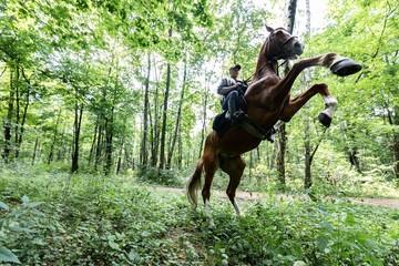 Полицейский конь службу не испортит: как несут дежурство в уникальном батальоне московского МВД