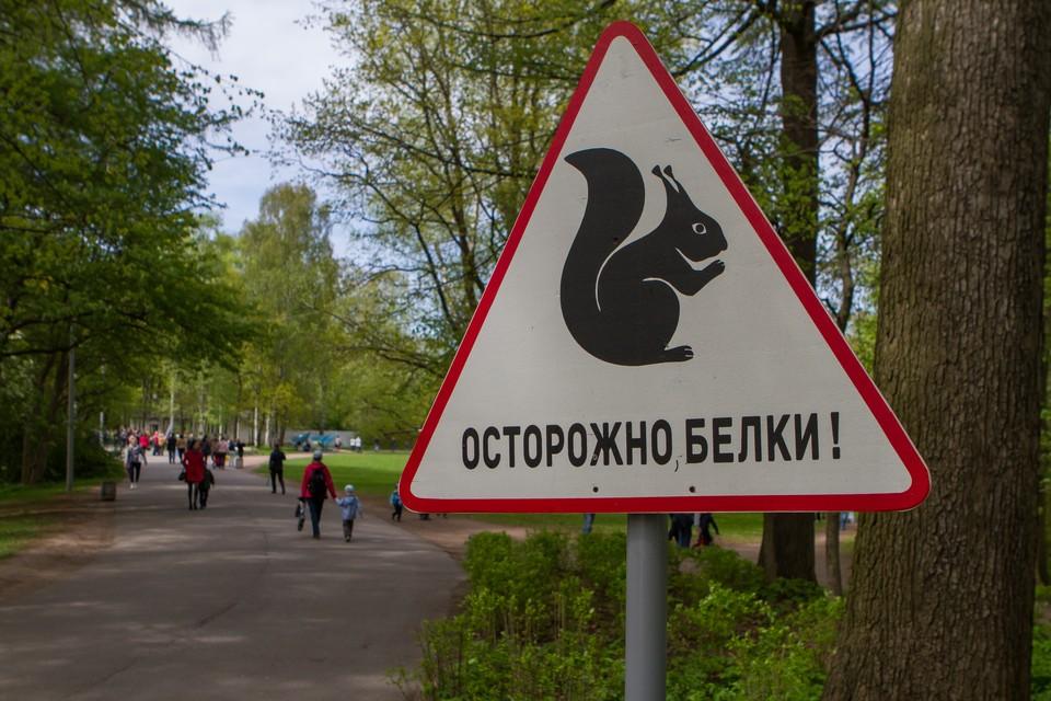 Гостям парка периодически приходится спасать раненых зверьков