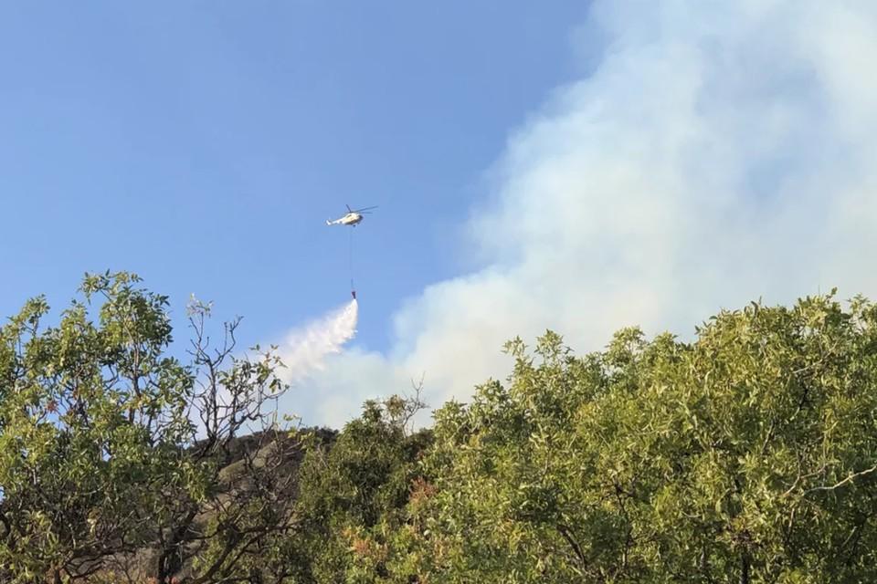 Рослесхоз взял на особый контроль тушение пожара в заповеднике «Утриш».