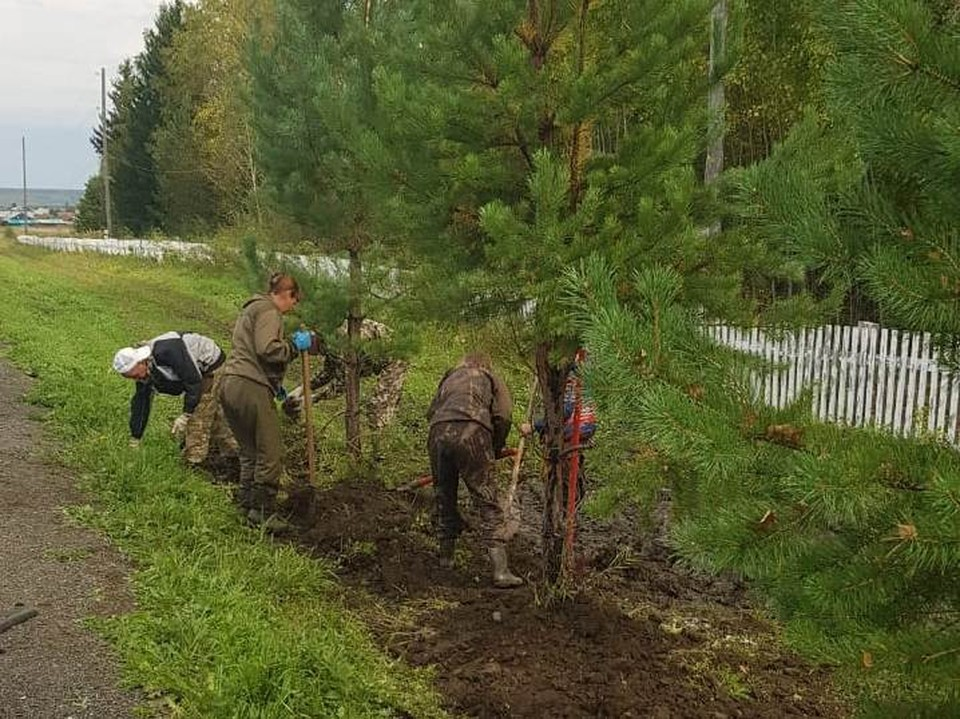 В Красноярском крае высадят более 60 тысяч деревьев и кустарников в рамках акции «Сохраним лес».