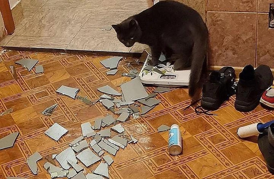 В социальных сетях осталось много сообщений о дрожащих люстрах и разбитых зеркалах. Фото: соцсети