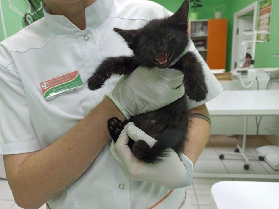 В Краснодаре спасли котенка из замурованного подвала