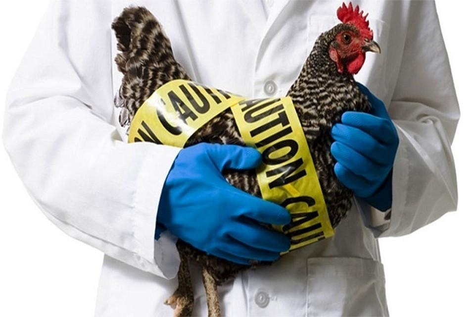 На территории этих сел введен карантин на 21 день (запрет на вывоз продукции птицеводства).