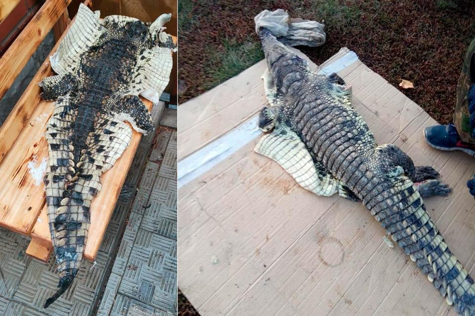 На Алтае браконьер поймал в реке крокодила