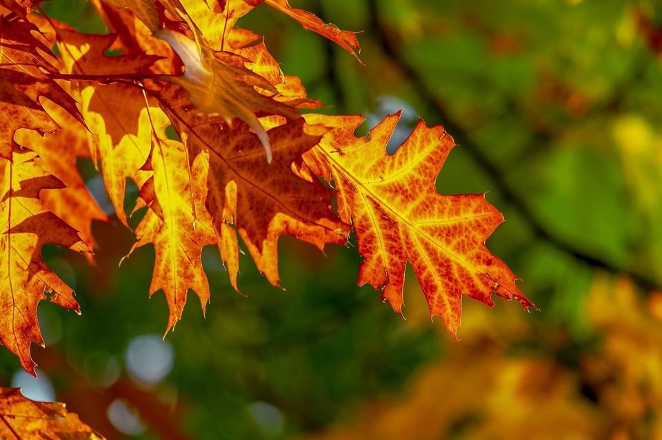 Погода в Югре на 3 октября