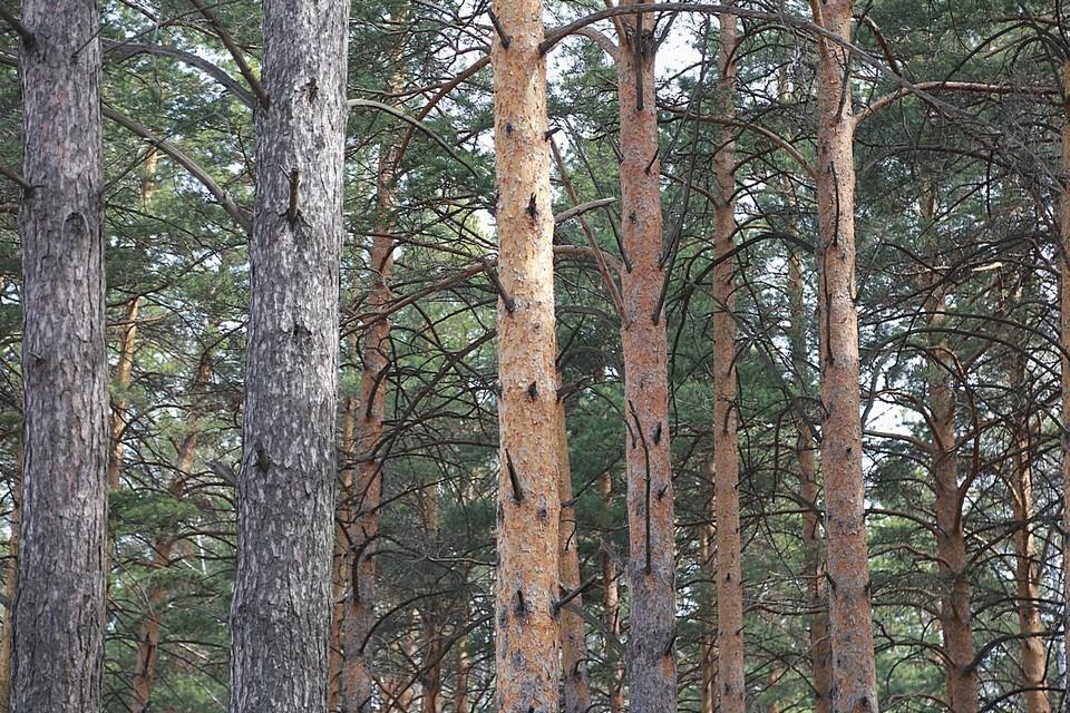 Три женщины увезли в лес 15-летнюю девушку за связь с чужим мужем.