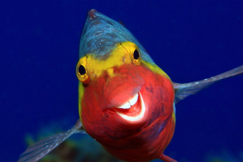 Так вот ты какая - рыба моей мечты! Фото: © Arturo Telle Thiemann/Comedy Wildlife Photo Awards 2020