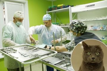 Впервые в Беларуси коту протезировали лапу: «Этой лапкой Филя может даже почесать за ухом»