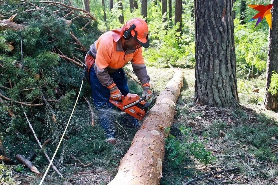 С начала года в России незаконно вырублено деревьев на 9,4 млрд рублей