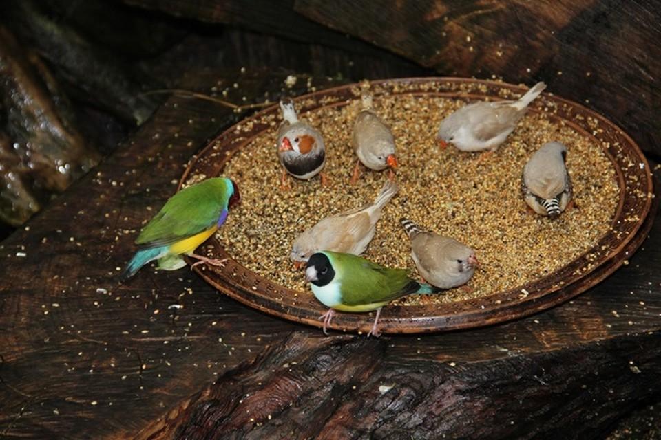 «Настоящий бэби-бум»: В сочинском Дендрарии вылупились 50 птенцов