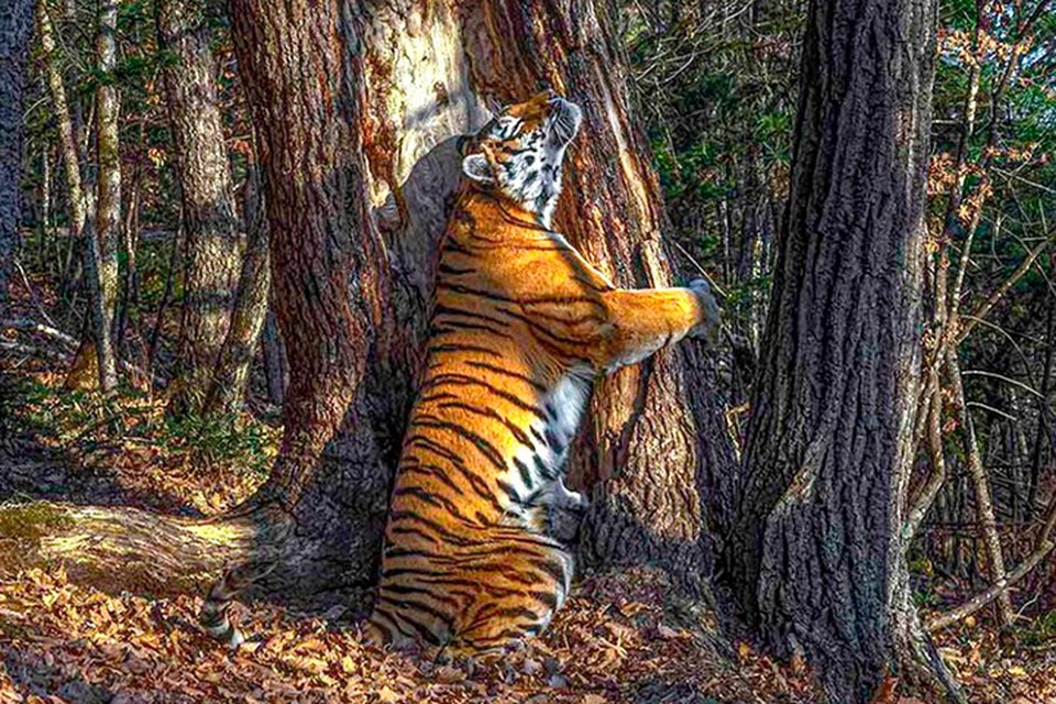Сергей Горшков. «Объятия». Гран-при. Фото: © Sergey Gorshkov/Wildlife Photographer of the Year 2020