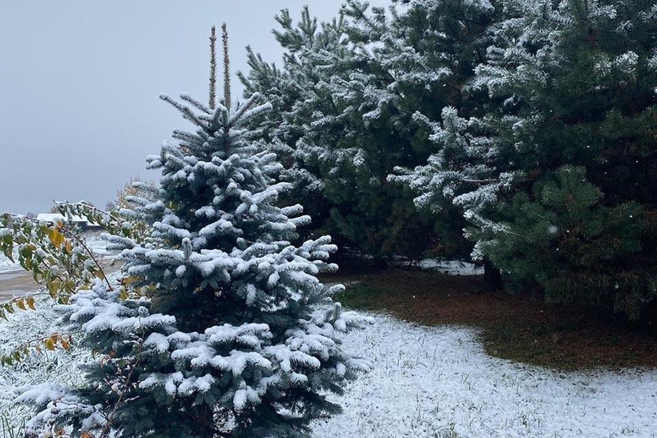 Дождались первого снега: пока москвичи публикуют видео, синоптики обещают потепление