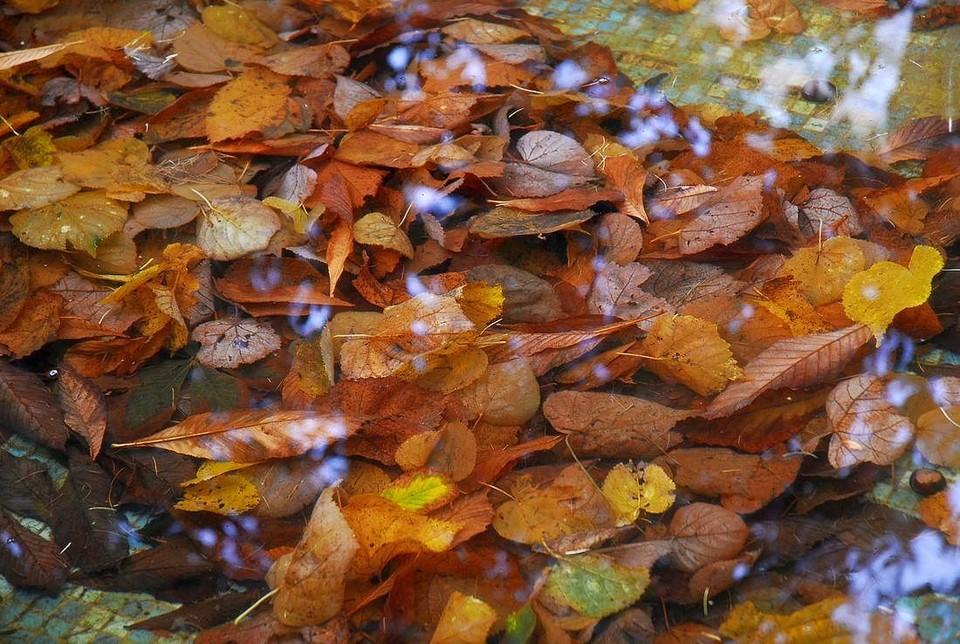 21 октября в Туле похолодает до +3 и пойдет дождь