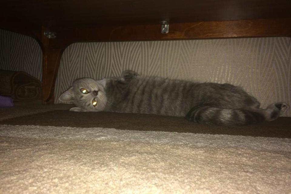 Бешенство от зараженного кота могло передаться через его слюну, которая попадала на царапины.