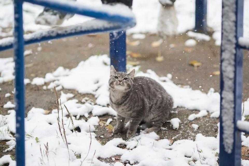 Снег будет идти весь день.
