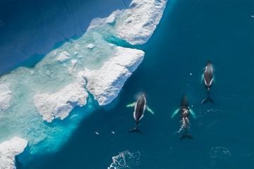 Дух захватывает: Лучшие фотографии, сделанные с воздуха