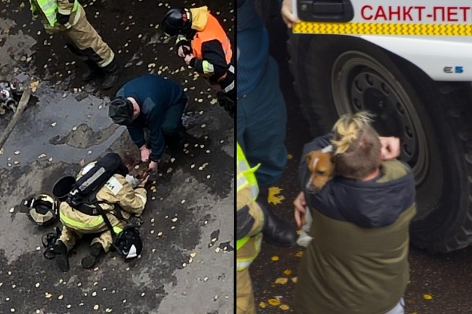 Пожарные откачали собаку, надышавшуюся дымом в горящей квартире в Санкт-Петербурге