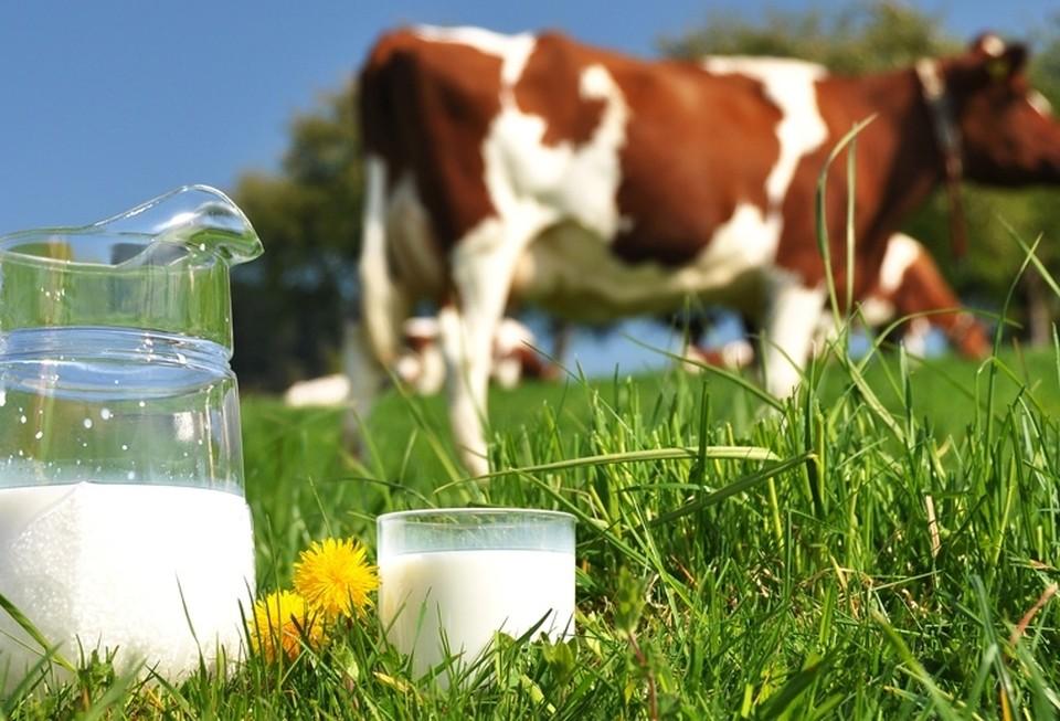 Россельхозбанк и Национальный союз производителей молока подписали соглашение о сотрудничестве.
