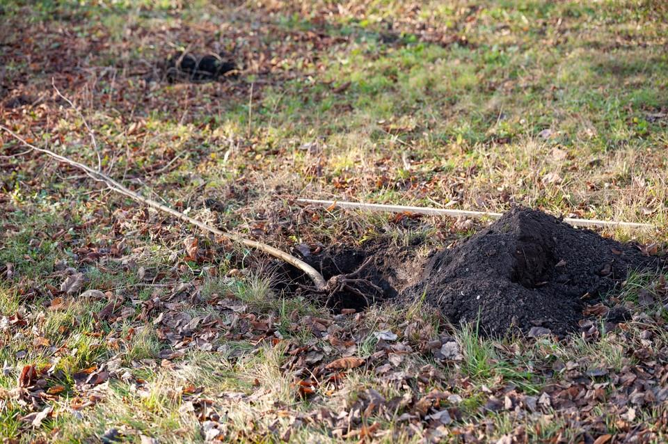 В парках и скверах Орла высадили 842 саженца деревьев и кустарников