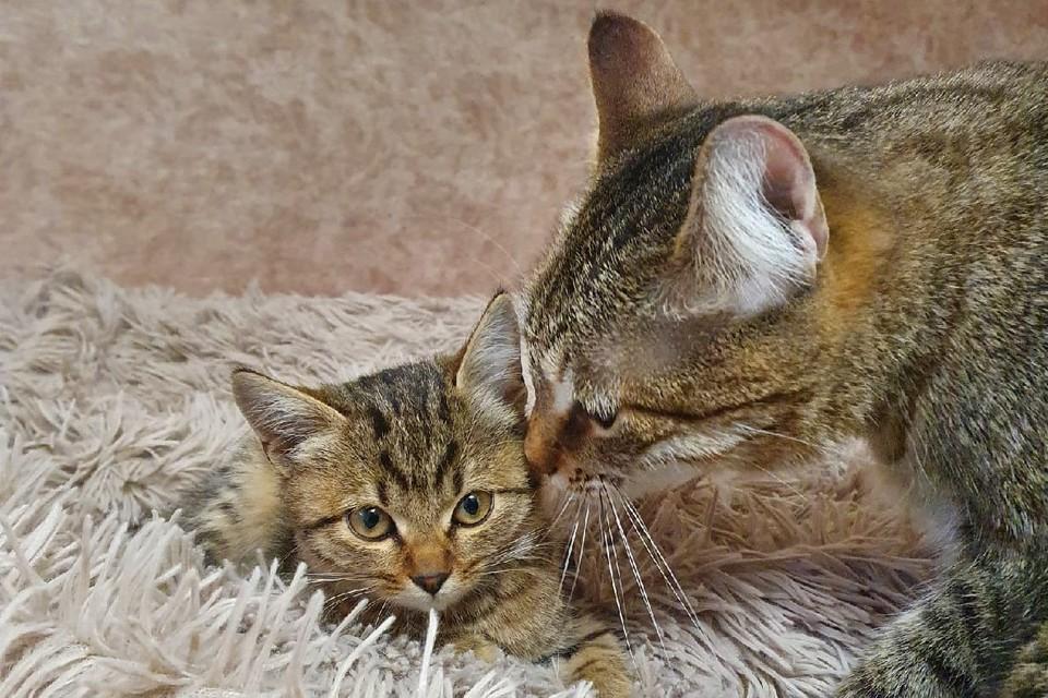 Севастопольцы ищут хозяев бездомным котятам
