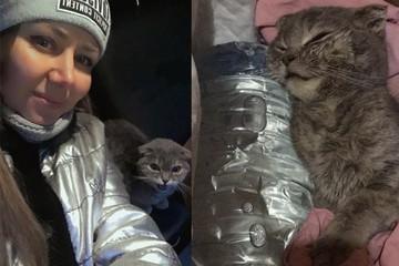 «Она даже не моргала»: жители Челябинской области спасли кошку, превратившуюся в ледышку