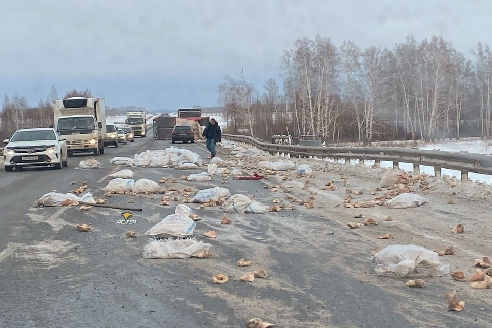 """Под Новосибирском перевернулся прицеп грузовика: на дорогу из прицепа высыпались свиные уши. Фото: """"АСТ-54"""""""
