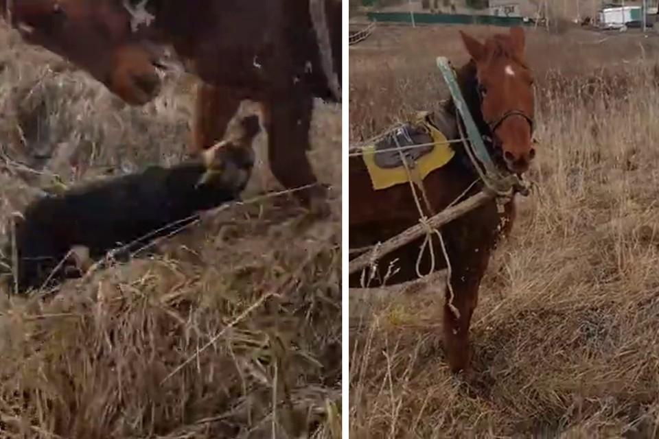 Эмоциональное видео со спасением коня разошлось по сети