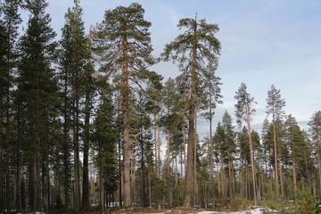 Эксперты отмечают снижение числа лесных пожаров по вине человека