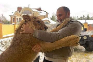 «Я любил его как родного»: Руководство парка «Тайган» обвиняют в гибели львов