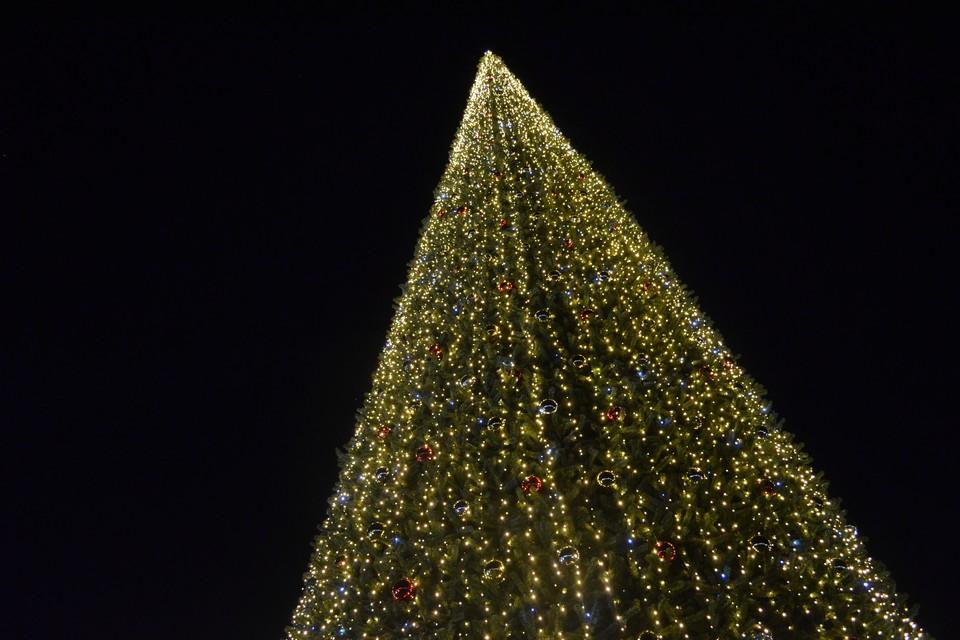 На площади Петра в Липецке начали устанавливать елку