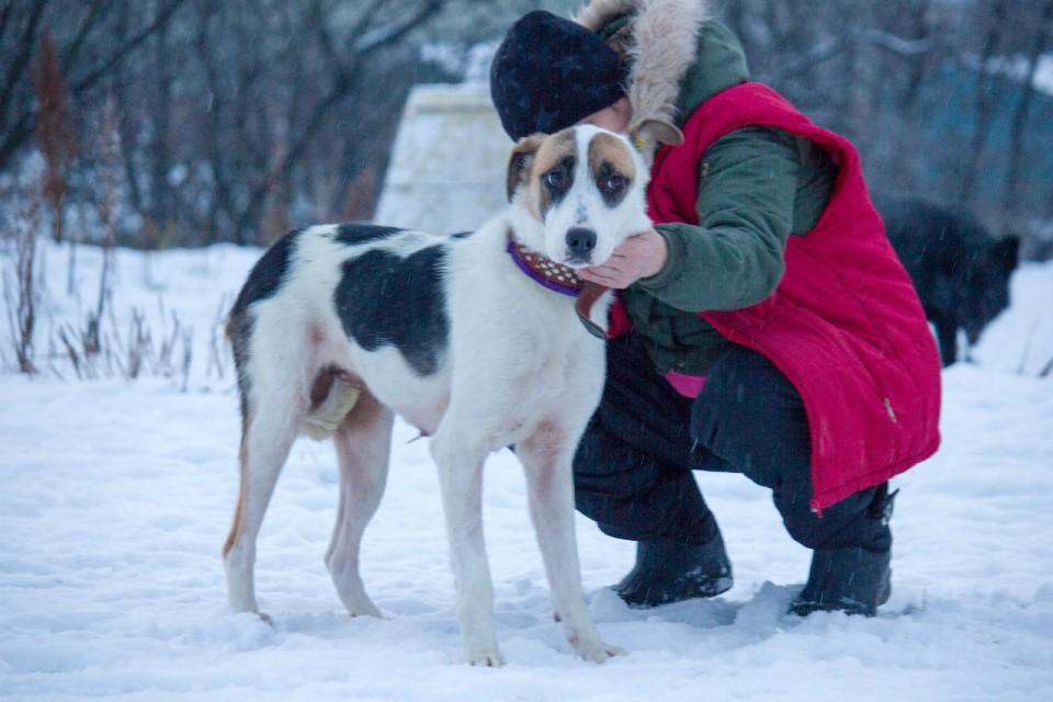 Истощение было таким сильным, что собака была похожа на скелет. Фото: «Ищу Человека».