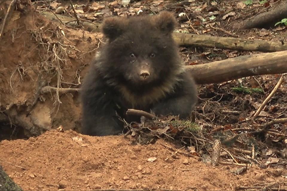 Пужа устроила место для зимовки Фото: orphan-bear.org