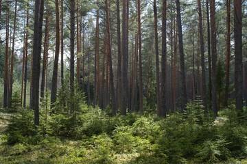 Эксперты не видят необходимости в ужесточении запретов на застройку в лесах