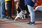 «Маме жгло глаза, и она не могла встать»: в Мурманске мужчина распылил содержимое перцового баллончика на женщину и ее собак