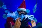 «Ластятся, как кошки»: в Новосибирске Дед Мороз спустился в аквариум к акулам и покормил их