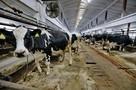 В Вологодской области выявили: чье молоко лучше