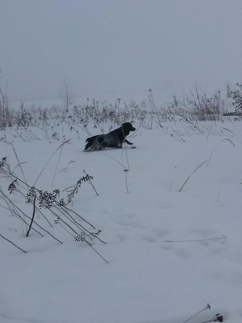С 1 января в регионе действуют Новые параметры осуществления охоты