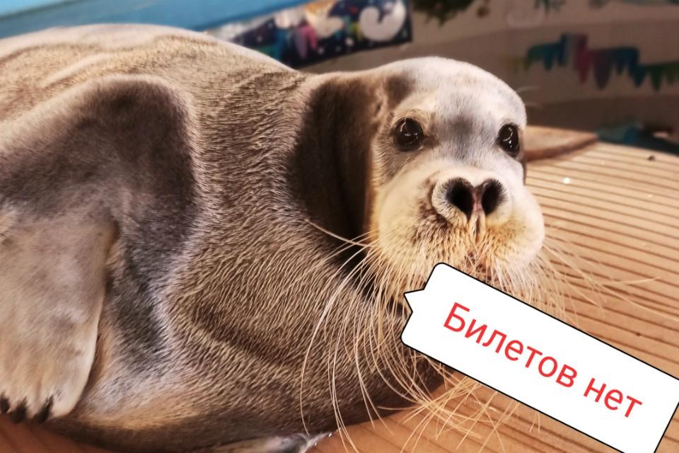 Тех, кто не успел, ждут в гости с 13 января. Фото: vk.com/okeanarium51