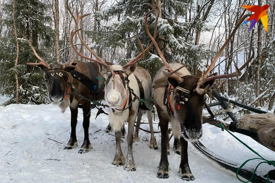 На Рождество в Мурманской области ожидается мороз до -25.