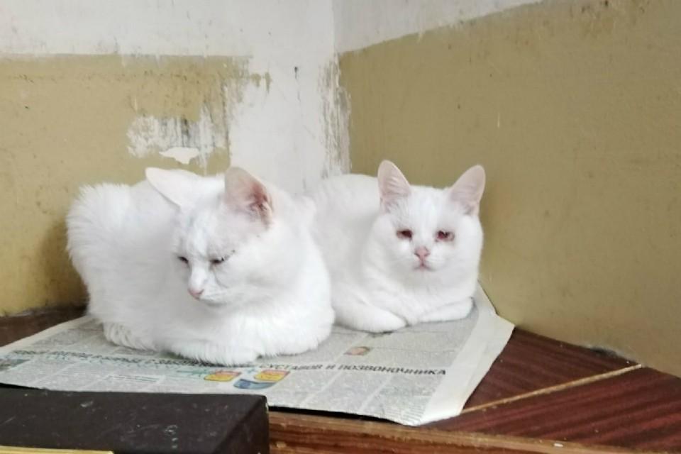 Кошечкам нужна помощь добрых людей. Фото: vk.com/murmandogs