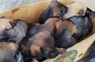 «Как такое может быть»: В Армянске стерилизованная собака родила 8 щенков