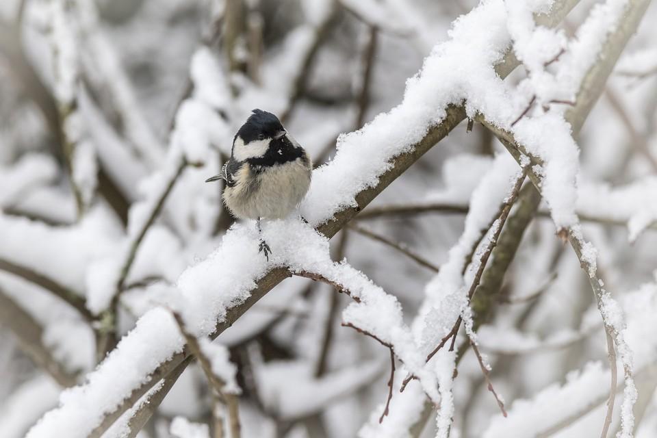 Температура в декабре была ниже климатической нормы
