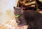 «Защищает от сглаза и отгоняет соседок от мужа»: Волшебную кошку за 15 миллионов рублей два года пытается продать ростовчанин