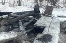 В Комсомольске-на-Амуре полиция ищет подростков, сжегших новорожденных щенков