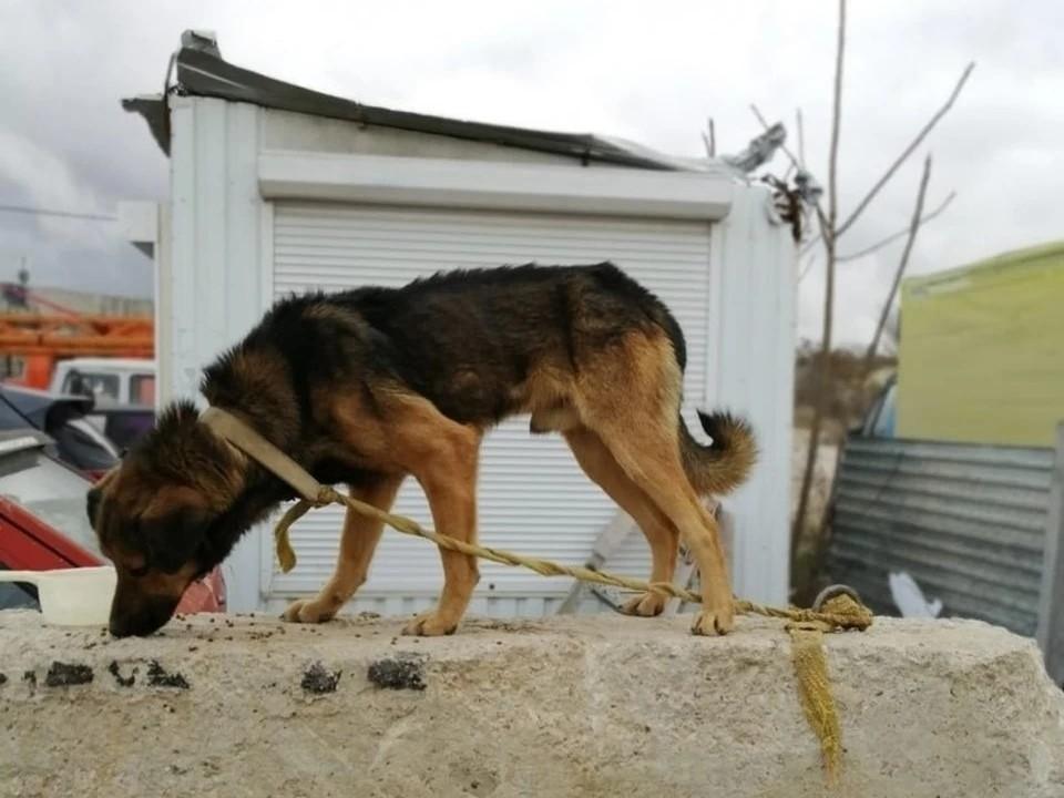 Фото: Вероника Павлова/Благотворительный фонд помощи бездомным животным/VK
