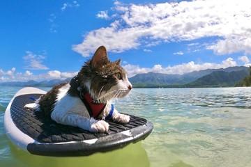Лучший антидепрессант: посмотрите смешные инстаграмы животных - от котов-серферов до ежей-путешественников