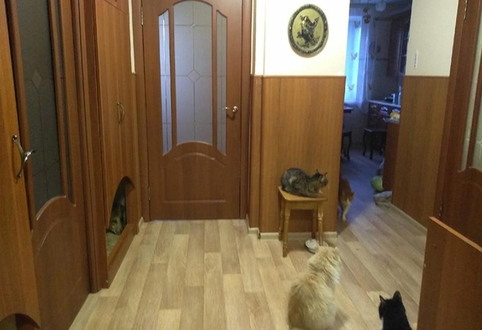 Из-за тяжелой болезни пенсионерки 60 кошек в Нижнем Новгороде оказались на грани гибели.