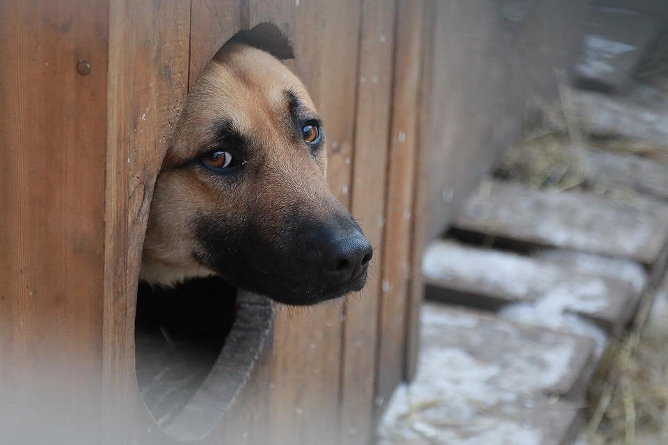 За выброшенных на улицу животных будут штрафовать.
